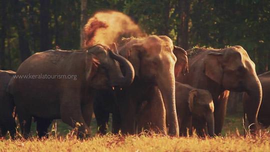 Encounters With The Wild - Amazing Kerala's Wildlife Treasure